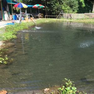 湧水を引き込んだ釣り堀りです