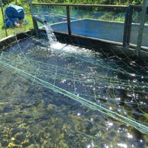 ヤマメの養殖用の水槽です